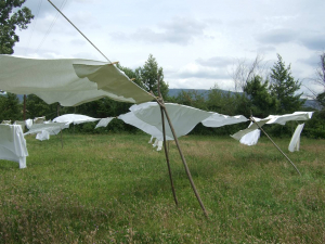 sheets in the wind