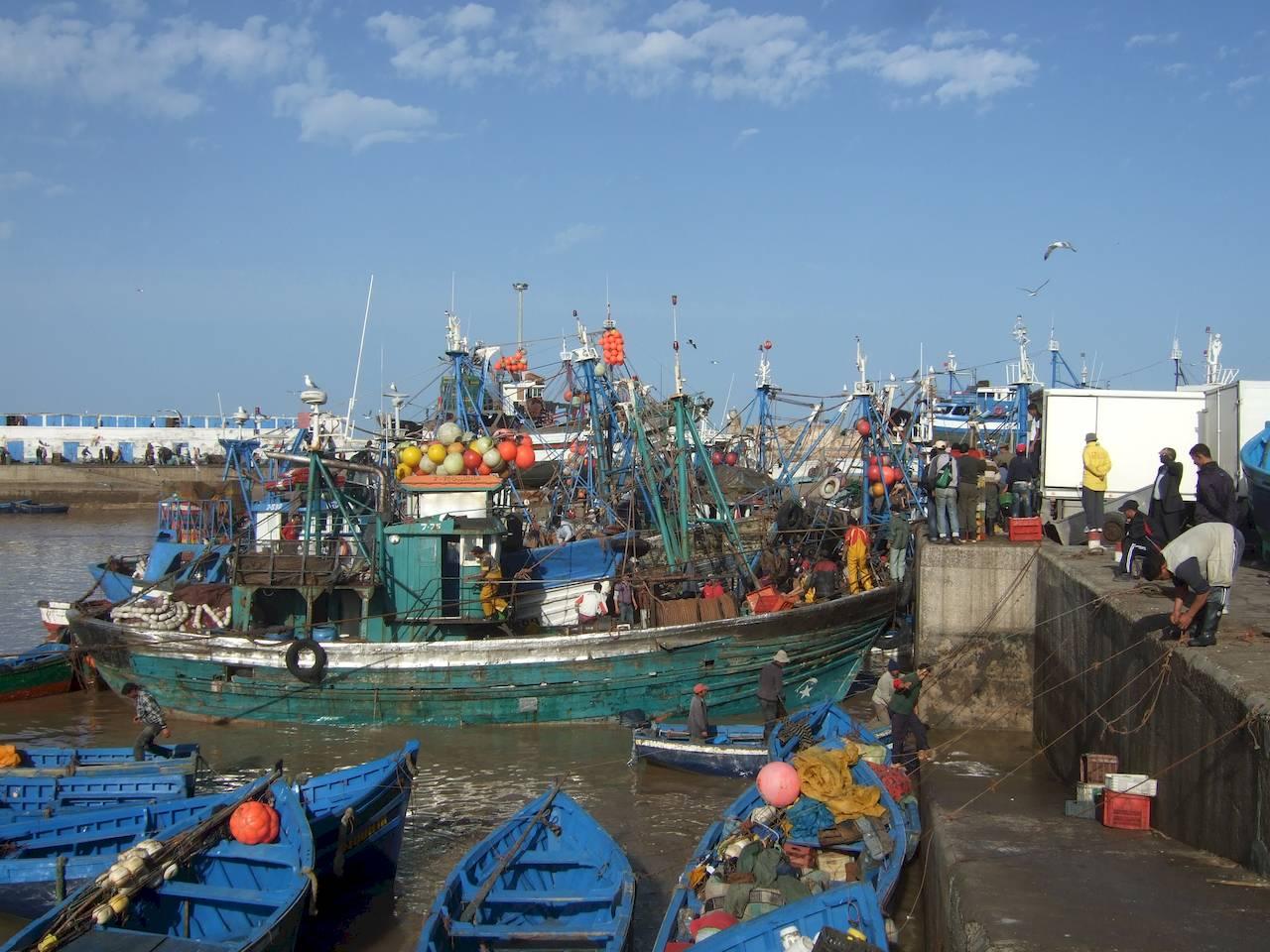 unloading trawlers to trucks