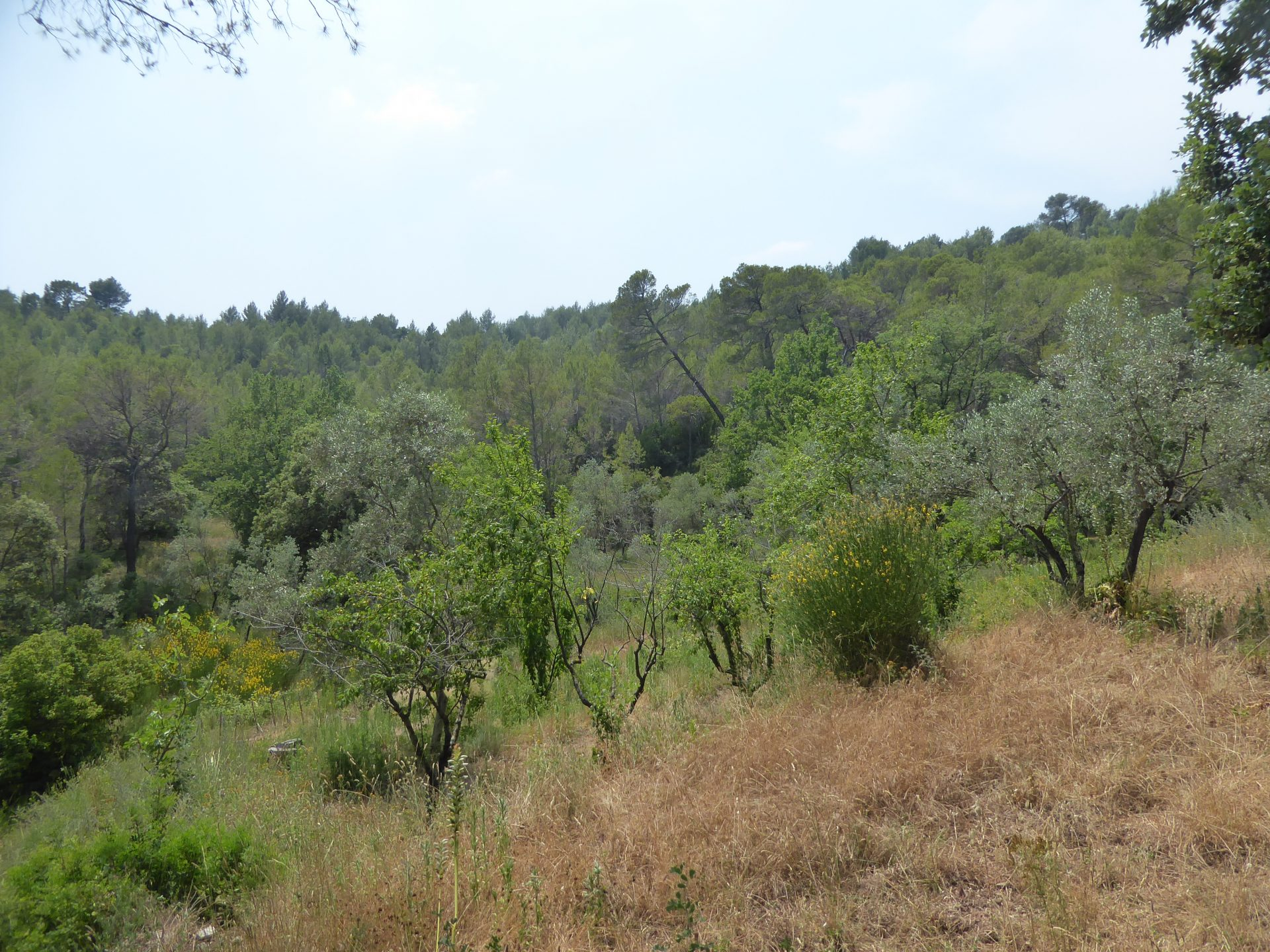 Countryside / undergrowth / moor